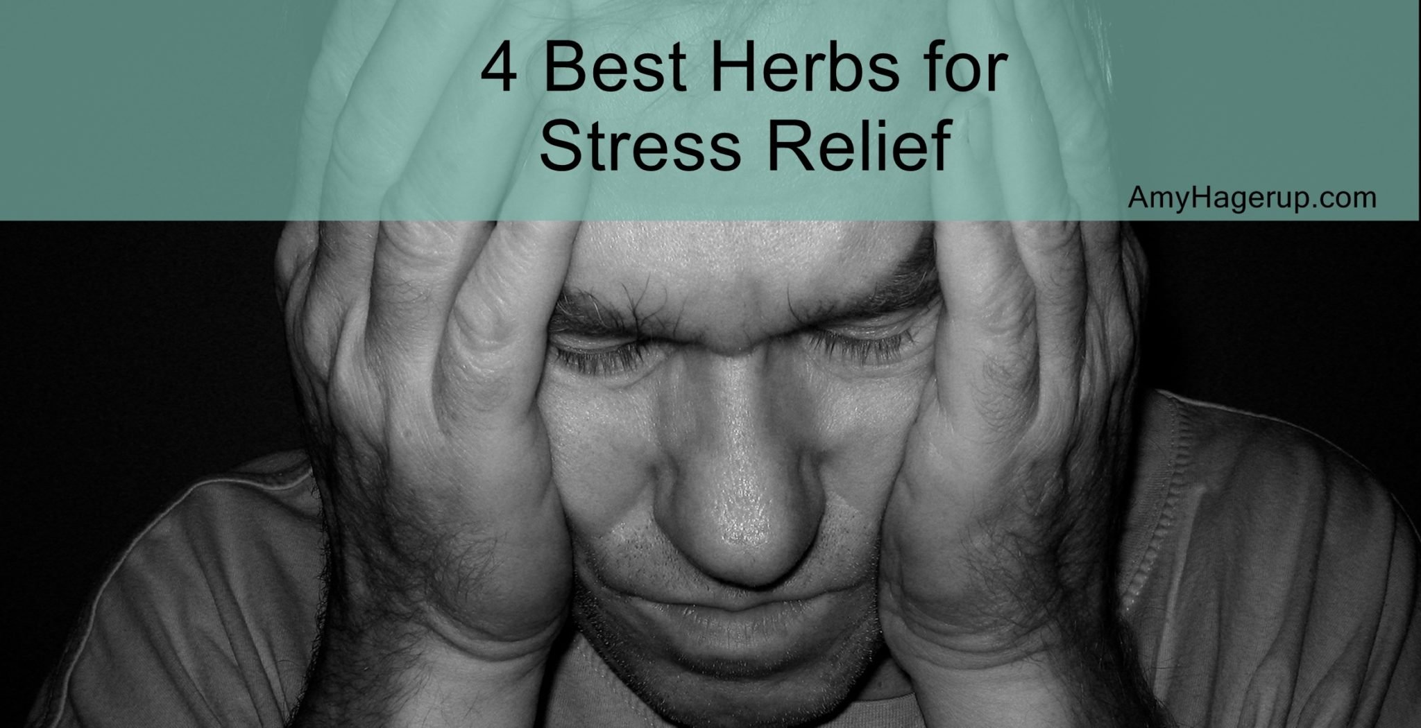 4 herbs for stress relief