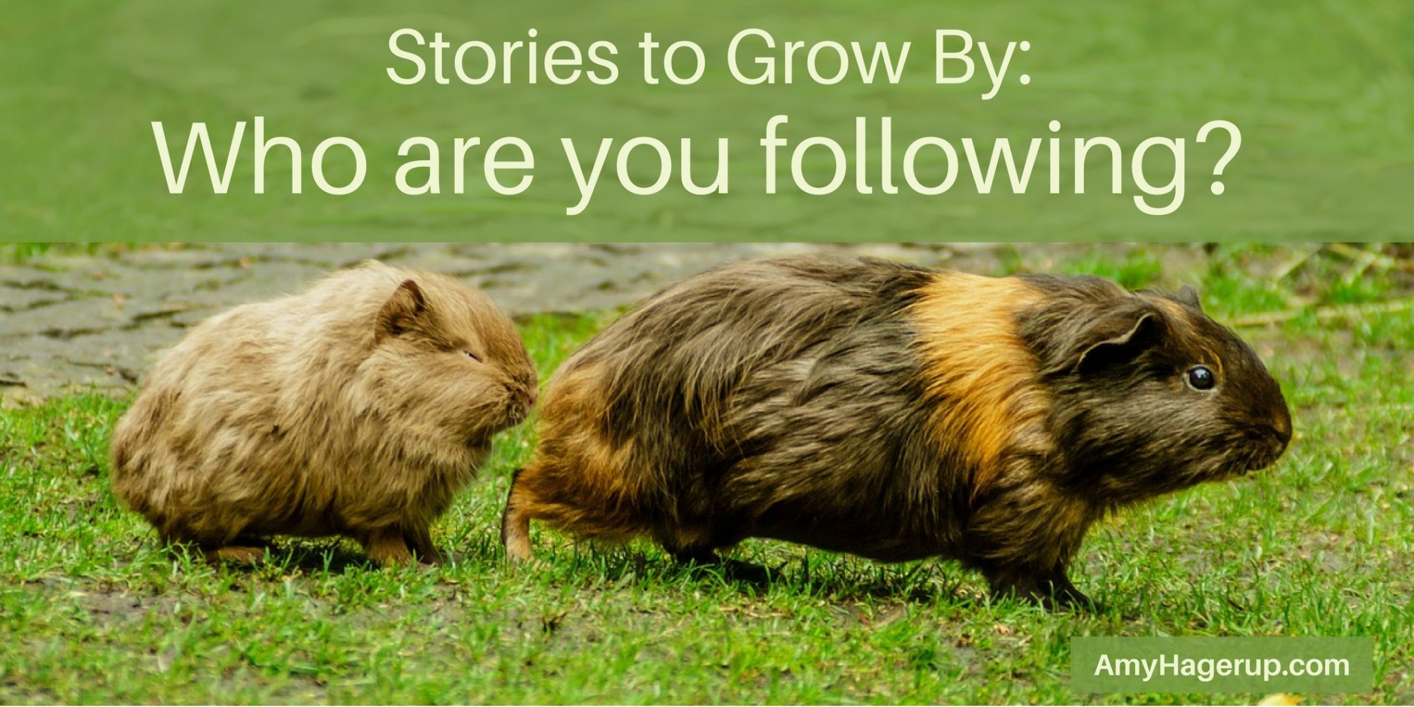 Stories to grow by - who are you following....